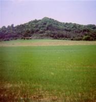 広大の牧場